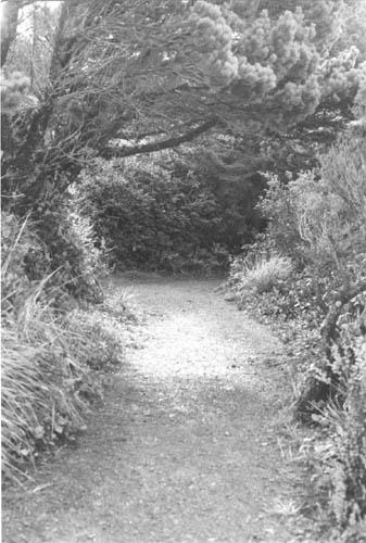 BW Trail