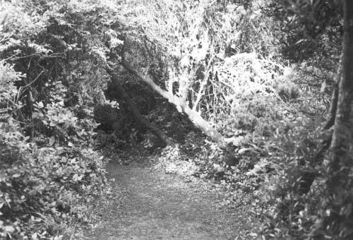 BW Trail Redux